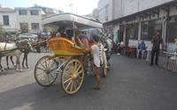 Büyükada'da atlara eziyet devam ediyor