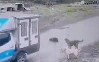Köpek ezen belediyeci hakkında karar...