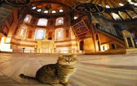Ayasofya'nın kedisi Gli'den iyi haber