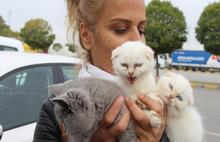 Devlet ihaleyle kedi yavrusu sattı