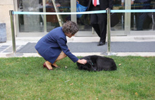 Meclis Bahçesine sığınan Karabaş maskot oldu