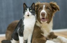 Hayvanlara şiddet takibe alınıyor