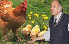 Profesörden şok tavuk eti uyarısı