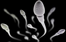 Sperm sayısıyla ilgili korkutan araştırma