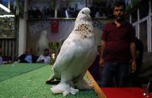 Kuş için 100 bin lira