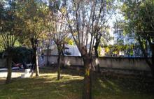 Otopark bahanesiyle ağaç kıyımı