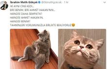 Melih Gökçek ile Ahmet Hakan'ın kedi atışması
