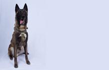 İşte Bağdadi'yi bitiren o köpek