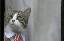 Assange tutuklandı, dünya kedi James'i konuştu!