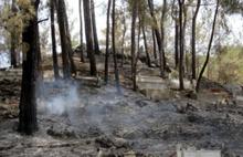 HDP'li vekilden orman yakanlara tepki