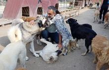 Melekler Şehri Sokak Hayvanlarını Koruma Derneği'nden hayvan severlere kuru ve yaş mama çağrısı