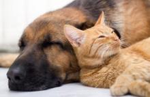 Hayvan Haklarını Koruma Komisyon Raporu Genel Kurulda
