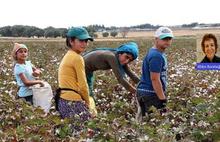 Urfa'da acı gerçek: 16 bin öğrenci mevsimlik işçisi