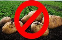 Patates ve kuru soğan ihracatına kısıtlama getirildi: Karardan önce kimler lisans alıp zengin oldu!