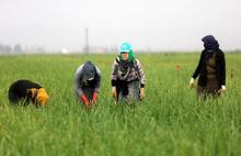 Son yedi yılda en az 817 kadın işçi iş cinayetlerinde yaşamını yitirdi