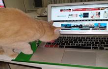 Kedili Çalışma Ofisleri Açıldı