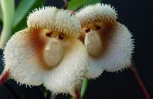 Şimdi de Maymun Çiçeği Virüsü Alarmı