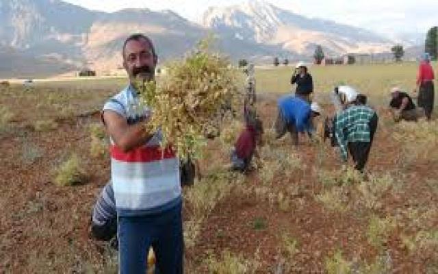 Komünist Başkan HDP  ile ittifak yapacak mı?