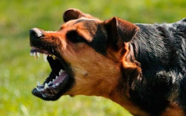 Köpek saldırıları artabilir uyarısı