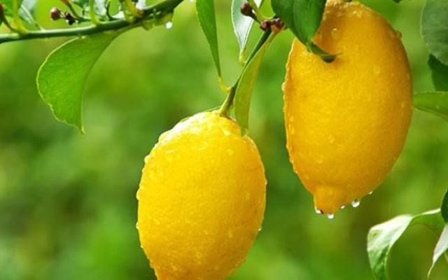 Limona Korona yasağı...